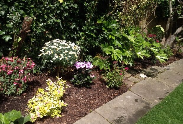 lawn edging weeds removed and flowers planted Tralee