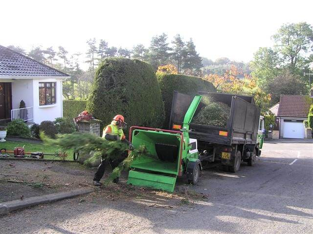 tree and garden hedge removals