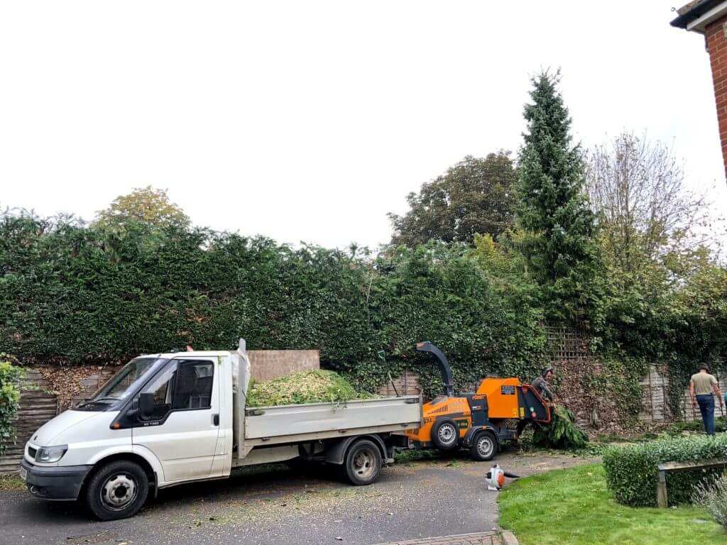 Kerry Tree Specialists at a job clearing overgrown hedges