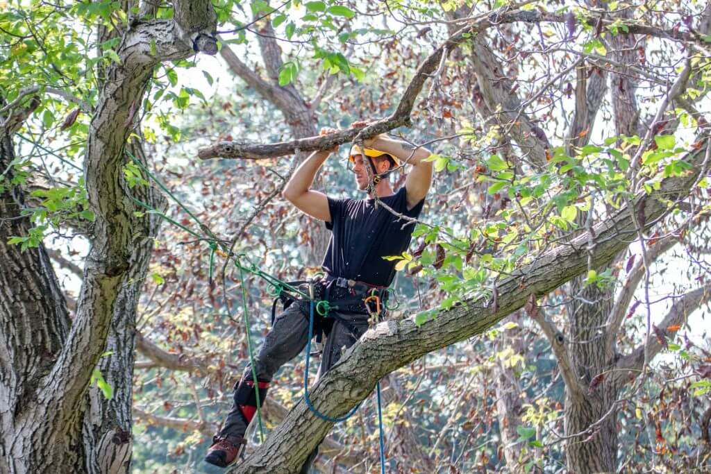 tree worker hanging and cutting branches away