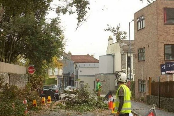cutting down branches next to a heavy traffic road