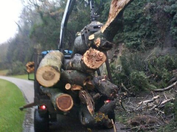 large logs of trees being removed by a tractor extension arm