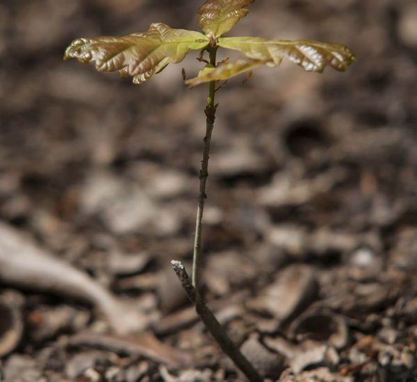 small seedling growing naturally in the forest